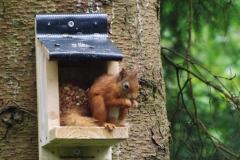 Red Squirrel © Catherine Leatherland