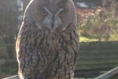 Long Eared Owl © Catherine Leatherland