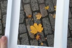 Autumn Leaves © Catherine Leatherland