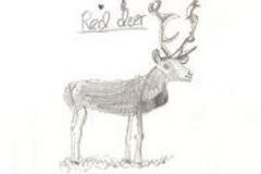 red_deer1